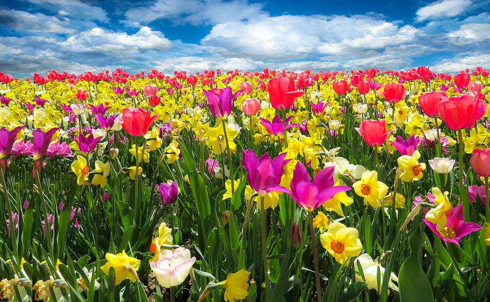 ソウル・ソウル近郊で楽しむ花祭り特集