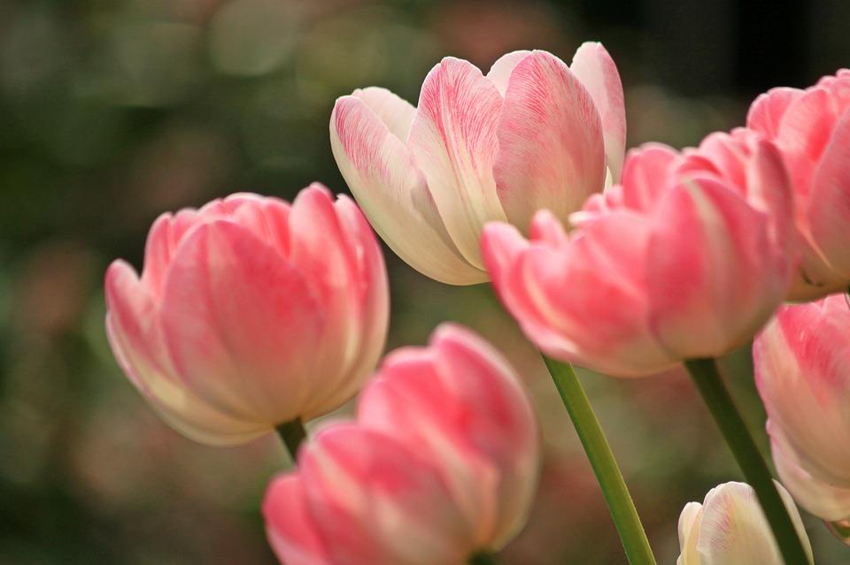 韓国全土で楽しめる【花祭り】特集♪